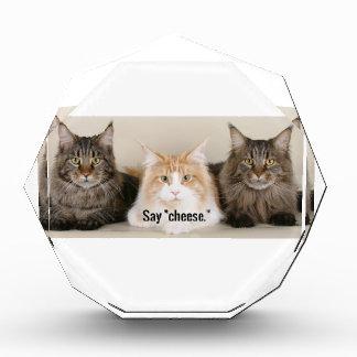 "Studio Photo - 3 Cats Saying ""Cheese"" Award"