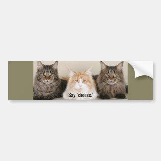 "Studio Photo - 3 Cats Saying ""Cheese"" Bumper Sticker"
