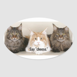 """Studio Photo - 3 Cats Saying """"Cheese"""" Oval Sticker"""