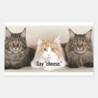 """Studio Photo - 3 Cats Saying """"Cheese"""" Rectangular Sticker"""
