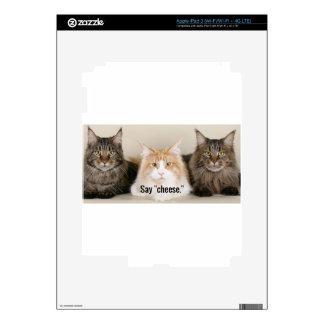 "Studio Photo - 3 Cats Saying ""Cheese"" Skins For iPad 3"
