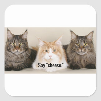 "Studio Photo - 3 Cats Saying ""Cheese"" Square Sticker"
