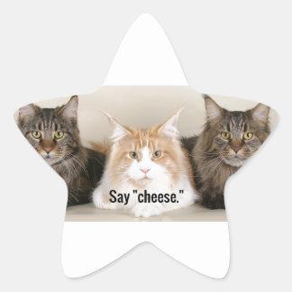 """Studio Photo - 3 Cats Saying """"Cheese"""" Star Sticker"""