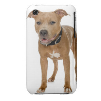 Studio portrait of American pit bull puppy 2 iPhone 3 Cover