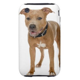 Studio portrait of American pit bull puppy 2 iPhone 3 Tough Cases