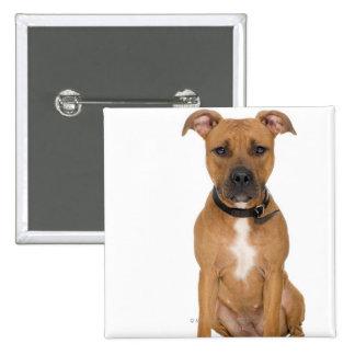 Studio portrait of American pit bull puppy 3 Button