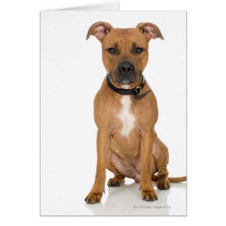 Studio portrait of American pit bull puppy 3 Greeting Card