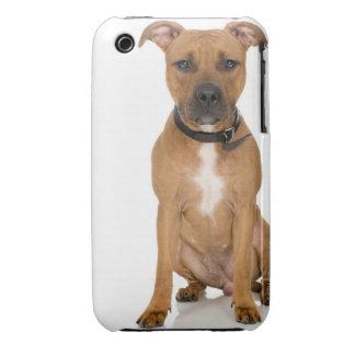 Studio portrait of American pit bull puppy 3 Case-Mate iPhone 3 Cases