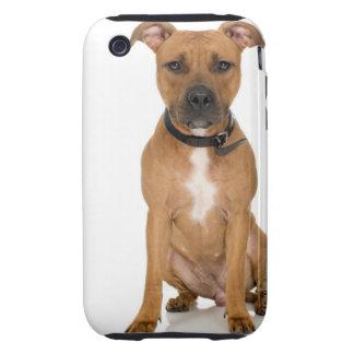 Studio portrait of American pit bull puppy 3 Tough iPhone 3 Cases