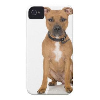 Studio portrait of American pit bull puppy 3 iPhone 4 Case-Mate Case