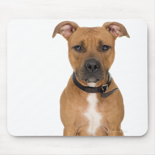 Studio portrait of American pit bull puppy 3 Mouse Pad