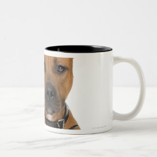 Studio portrait of American pit bull puppy 3 Two-Tone Coffee Mug