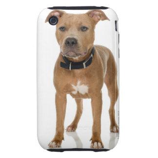 Studio portrait of American pit bull puppy iPhone 3 Tough Cases