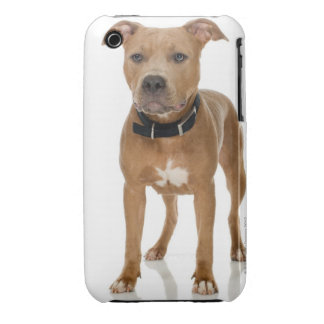 Studio portrait of American pit bull puppy iPhone 3 Covers