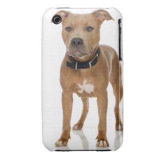 Studio portrait of American pit bull puppy iPhone 3 Case