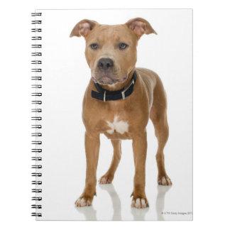 Studio portrait of American pit bull puppy Spiral Notebook
