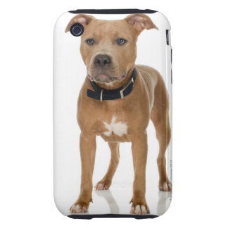 Studio portrait of American pit bull puppy Tough iPhone 3 Cover