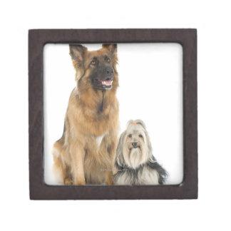 Studio portrait of Belgian shepherd and Shih Tzu Gift Box