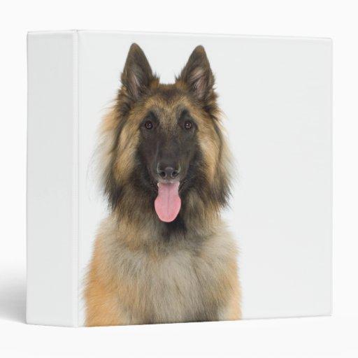 Studio portrait of Belgian shepherd dog Binders