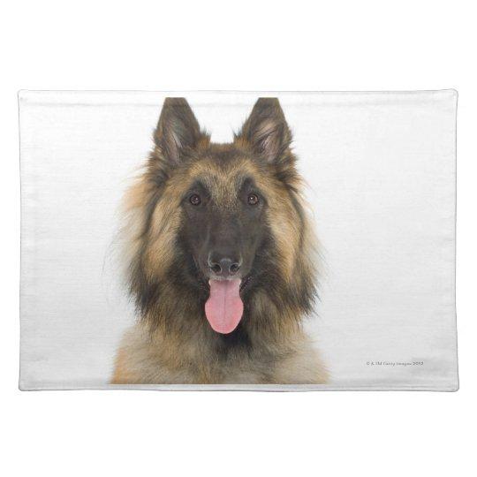 Studio portrait of Belgian shepherd dog Cloth Placemat