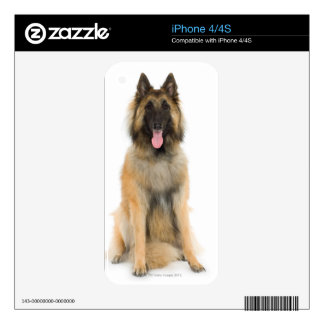 Studio portrait of Belgian shepherd dog Decal For The iPhone 4S