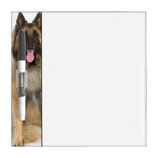Studio portrait of Belgian shepherd dog Dry-Erase Board