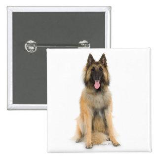Studio portrait of Belgian shepherd dog Pinback Button