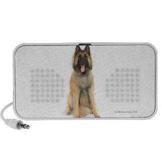 Studio portrait of Belgian shepherd dog Speaker