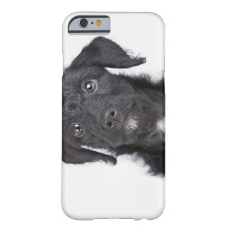 Studio portrait of black jack-a-doodle barely there iPhone 6 case