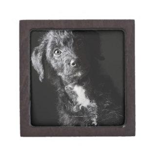 Studio portrait of black jack-a-doodle gift box