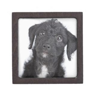 Studio portrait of black jack-a-doodle jewelry box