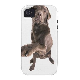 Studio portrait of Chocolate Labrador Case-Mate iPhone 4 Case