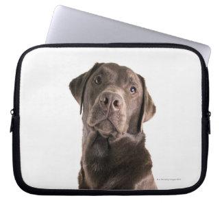 Studio portrait of Chocolate Labrador Computer Sleeve