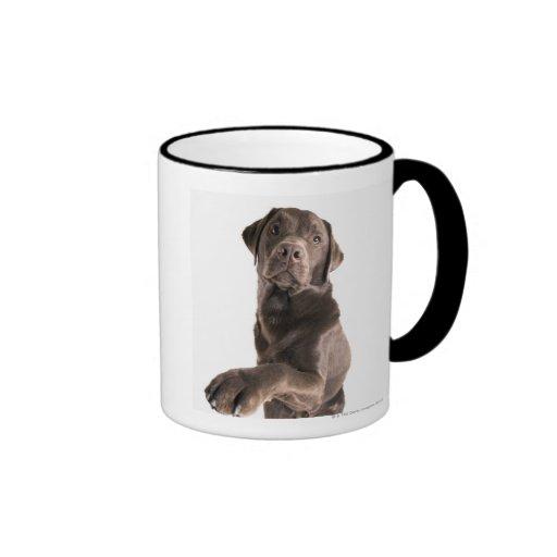 Studio portrait of Chocolate Labrador Ringer Coffee Mug