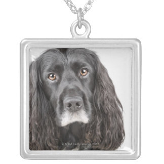 Studio portrait of cocker spaniel silver plated necklace