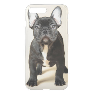 Studio portrait of French bulldog puppy standing iPhone 7 Plus Case