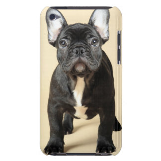 Studio portrait of French bulldog puppy standing iPod Touch Cover