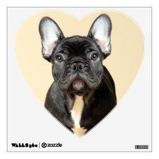 Studio portrait of French bulldog puppy standing Wall Sticker