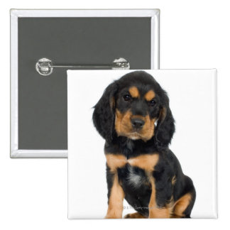 Studio portrait of Rottweiler puppy Button