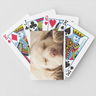 Studio portrait of Yellow Labrador Retriever Bicycle Playing Cards