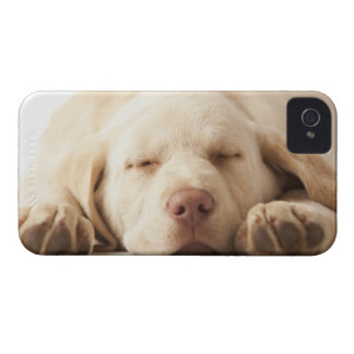 Studio portrait of Yellow Labrador Retriever iPhone 4 Case-Mate Case