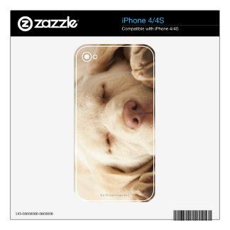 Studio portrait of Yellow Labrador Retriever Skin For iPhone 4
