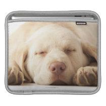 Studio portrait of Yellow Labrador Retriever Sleeve For iPads
