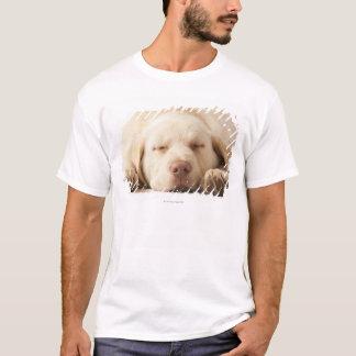 Studio portrait of Yellow Labrador Retriever T-Shirt