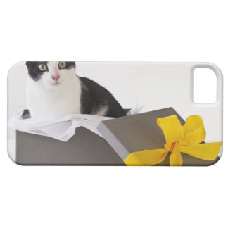 Studio shot of black and white cat in gift box iPhone SE/5/5s case