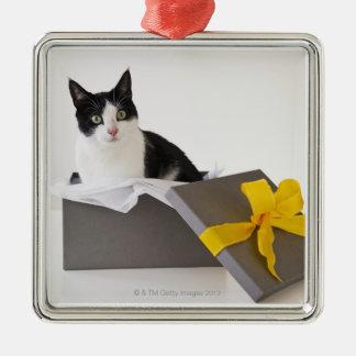 Studio shot of black and white cat in gift box metal ornament