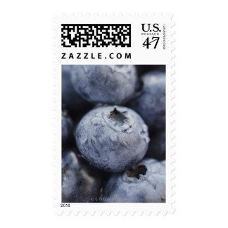 Studio shot of blueberries 2 stamp