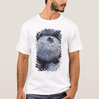 Studio shot of blueberries 2 T-Shirt