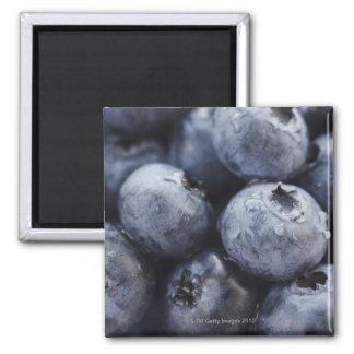 Studio shot of blueberries 3 2 inch square magnet
