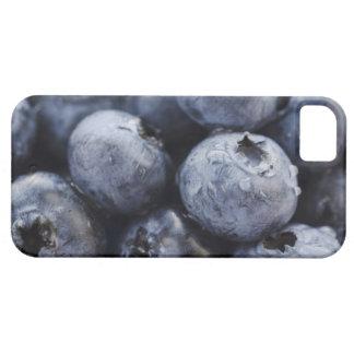 Studio shot of blueberries 3 iPhone SE/5/5s case